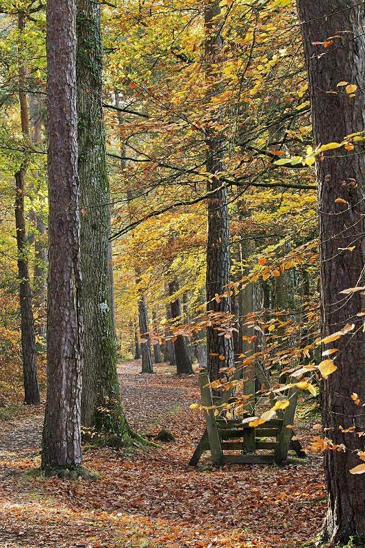 Tarka Trail Meeth - Devon Landscapes