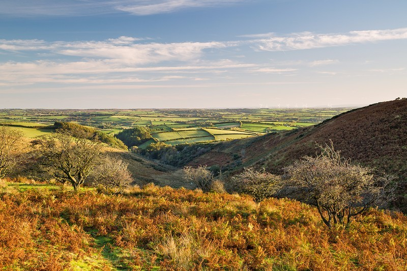 Molland Common - Exmoor