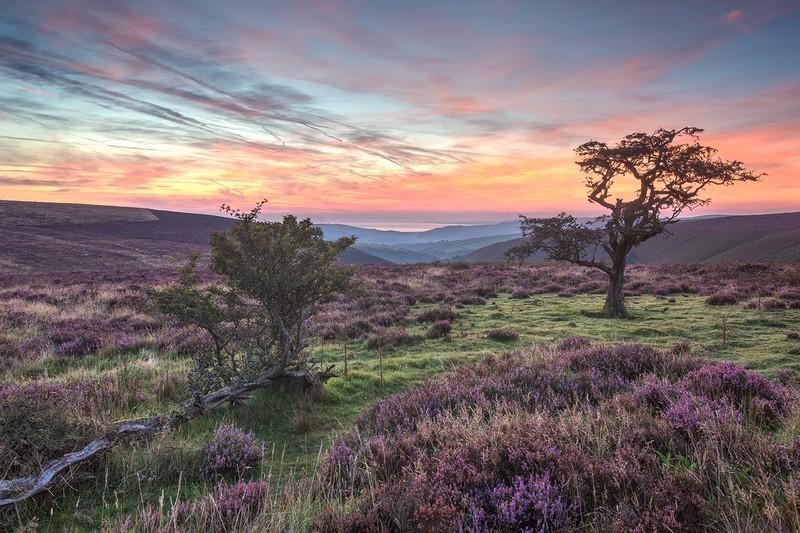 Porlock Common - Exmoor