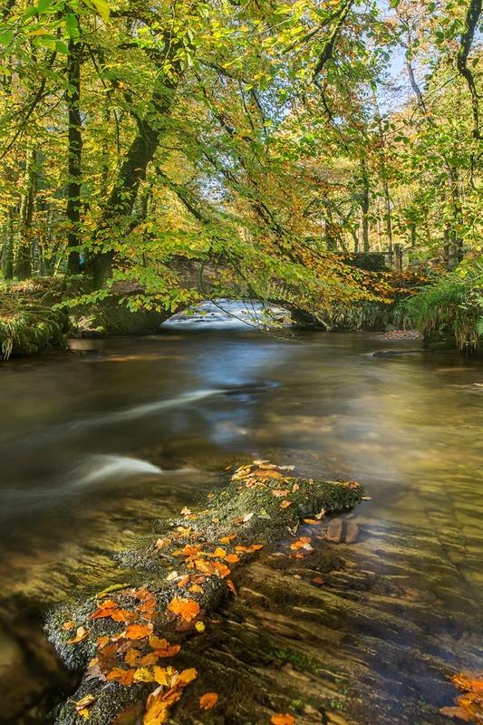 Castle Bridge Autumn - Exmoor