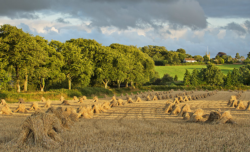 Rows of Straw Winkleigh - Devon Landscapes