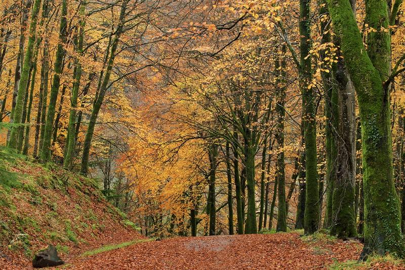 Brayford Autumn - Devon Landscapes