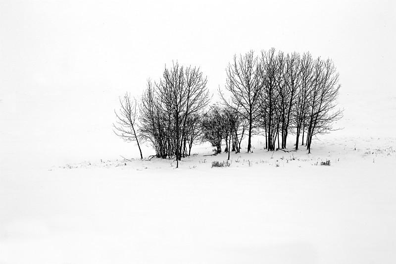 L42 - Landscapes