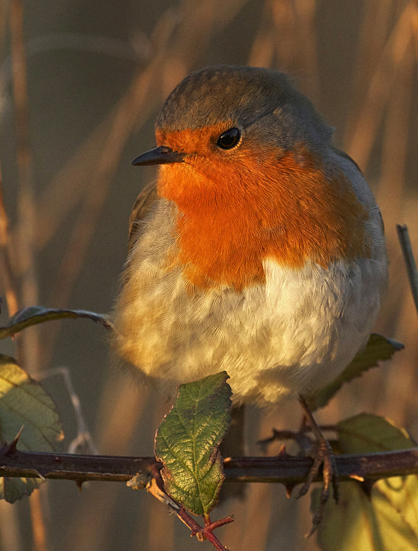 Robin - Anything Else!