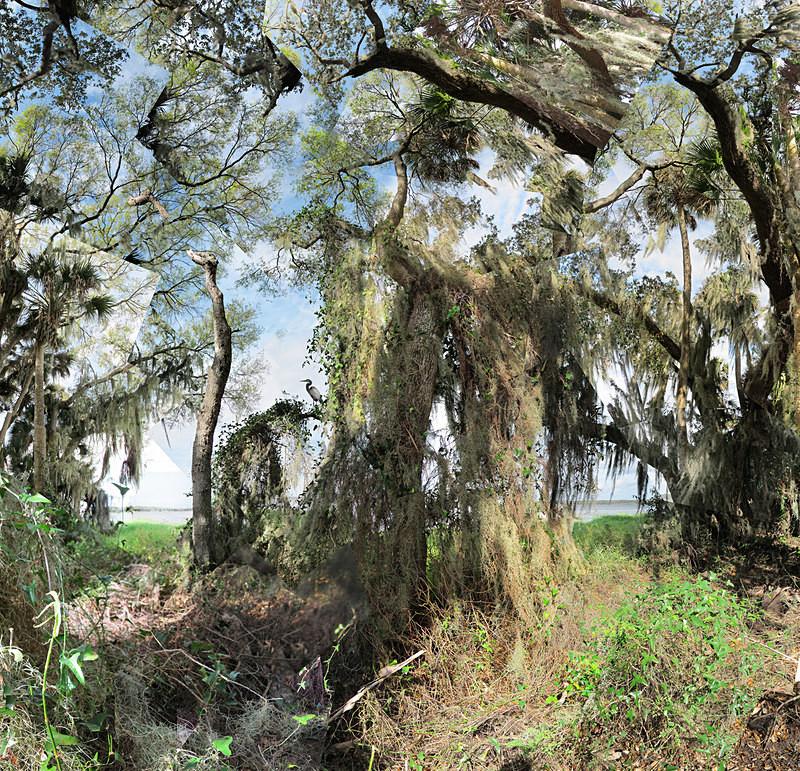 Heron, Myakka River - Florida