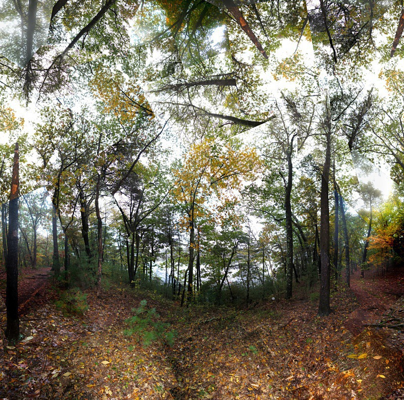 Fog - Walden Pond - Walden