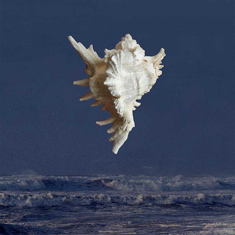 Night Dancer - Ocean Shell