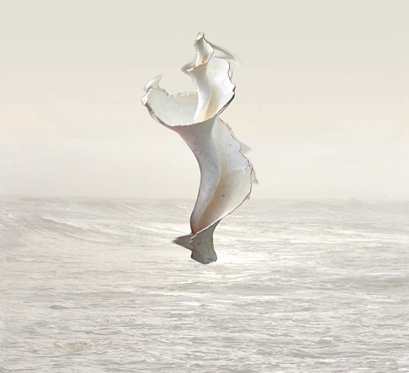 Isadora  - Ocean Shell