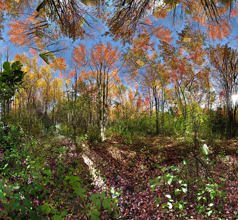 In the woods - Fruitlands - Fruitlands