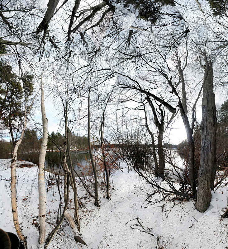 Tracks, Walden Pond - Walden