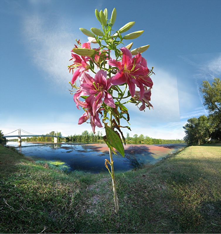 La fleur de Garonne - Auvillar France