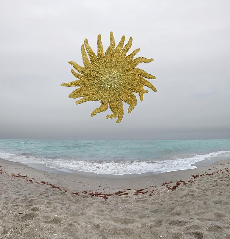Sunflower - Florida
