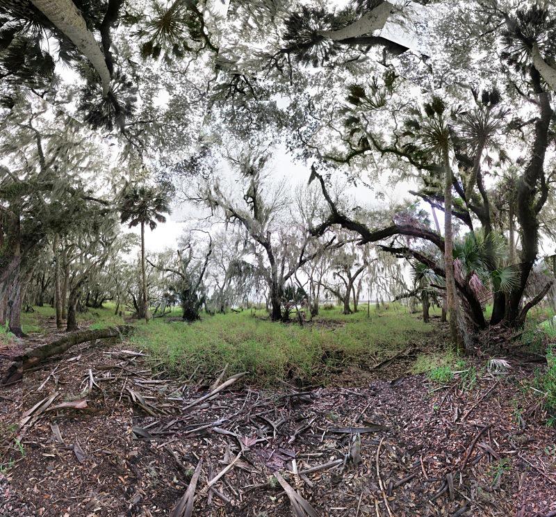 Along the Myakka River, Sarasota - Florida