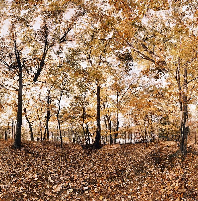 Secrets, Walden Pond - Walden
