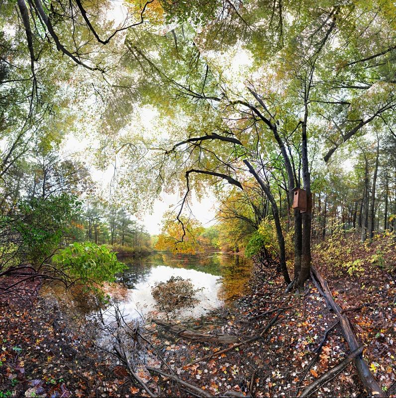 Wyman Meadow,  Walden - Walden