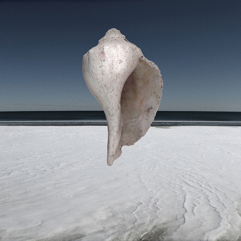 Winter Pearl - Ocean Shell