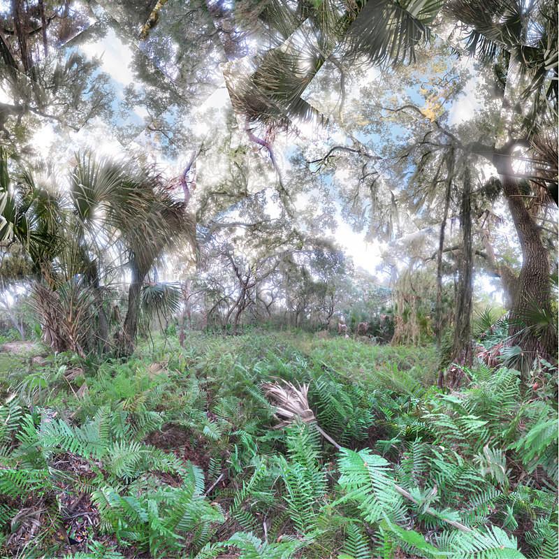 Softly, Oscar Scherer State Park - Florida