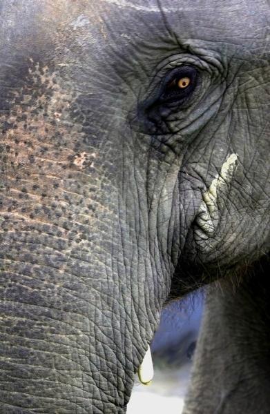 Elephant Eye - India (Assam, Brahmaputra cruise, Agra and Jaipur)