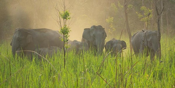 Wild elephant herd - India (Assam, Brahmaputra cruise, Agra and Jaipur)