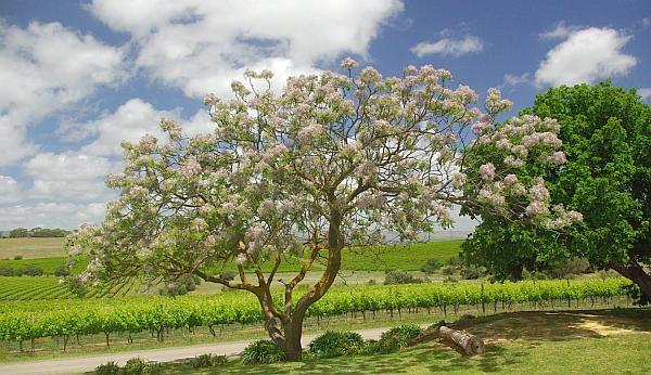 Coriole vista - South Australian Wineries