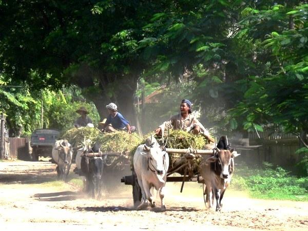 Bullock wagons - Burma