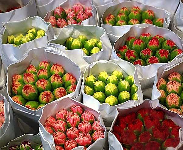Hongkong Flower Market - Hongkong and Macau