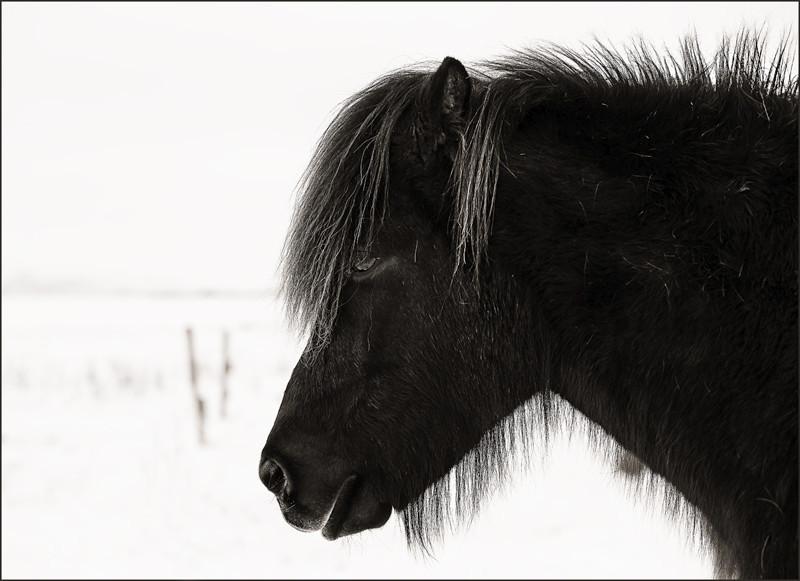 Pony Portrait - New Work