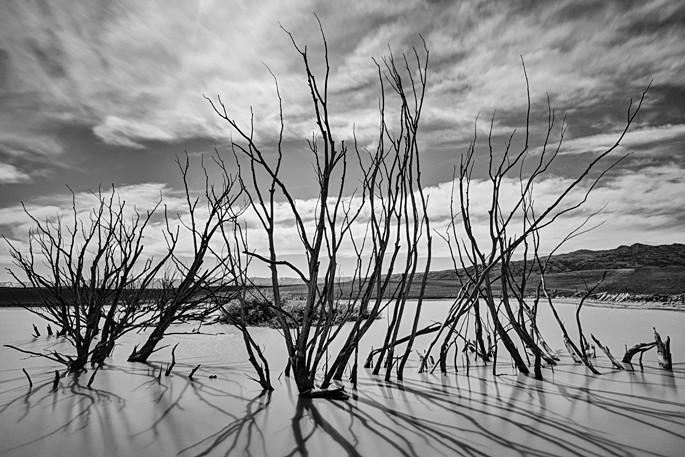Dead Trees - New Zealand