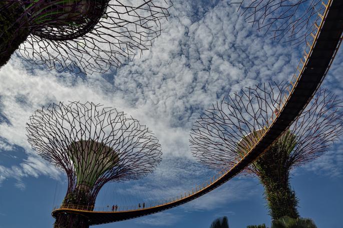 Tree Grove - Singapore