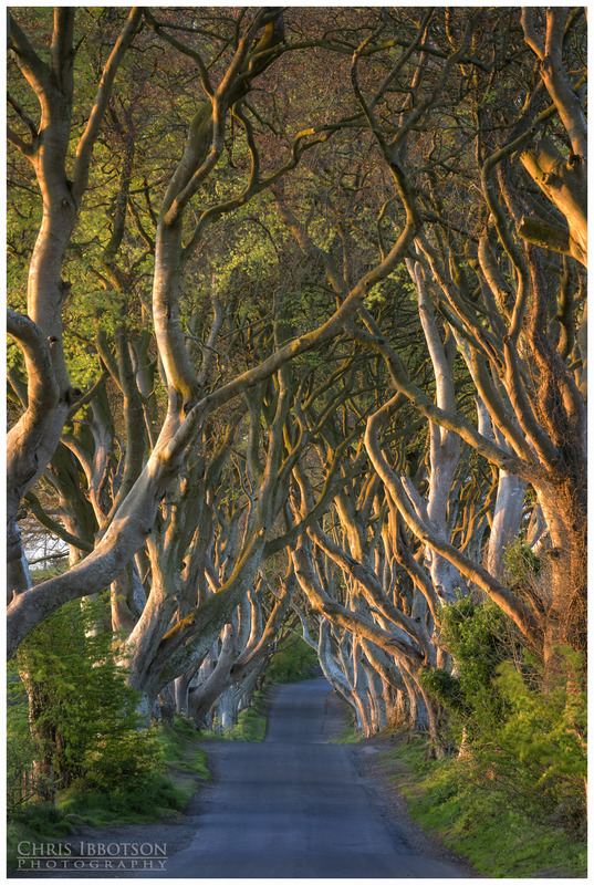 Entwined, The Dark Hedges