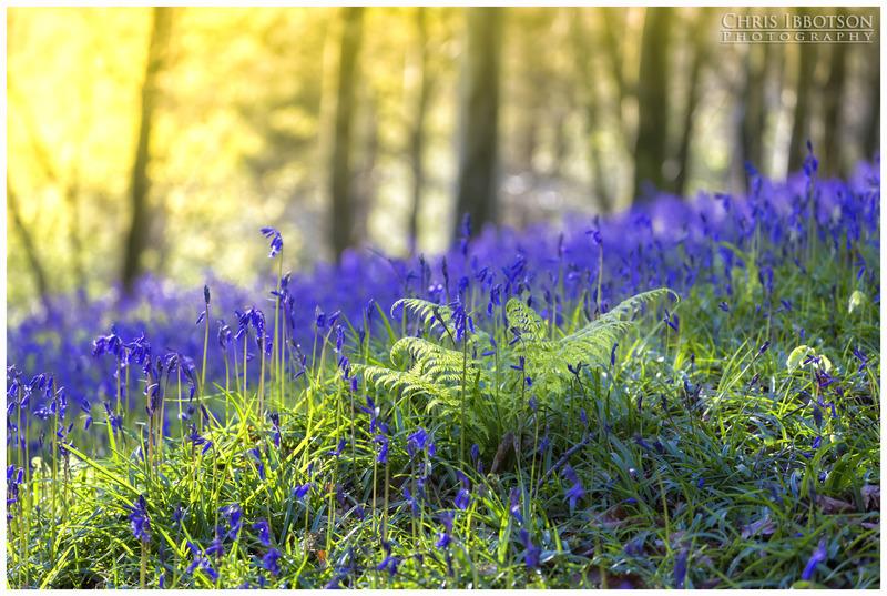 The Bluebells, Portglenone