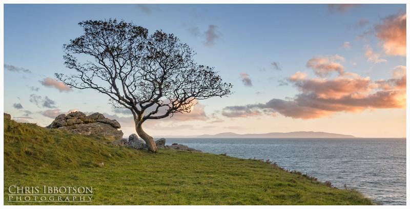 The Lone Tree, Murlough Bay