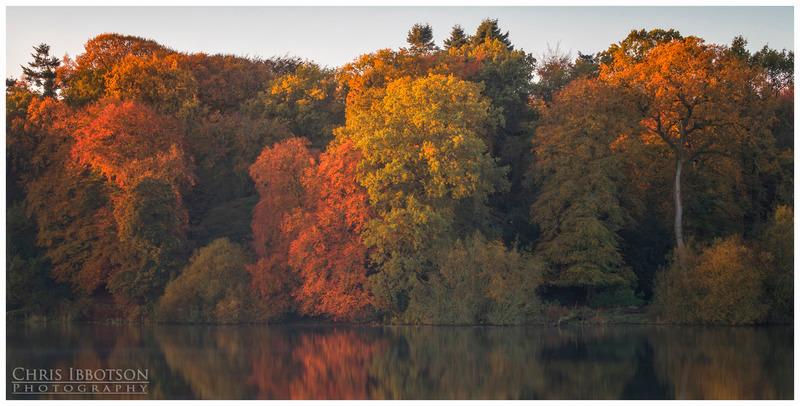 Autumn Colour, Hillsborough Lake