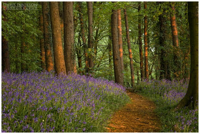 Walk Through the Bluebells, Portglenone