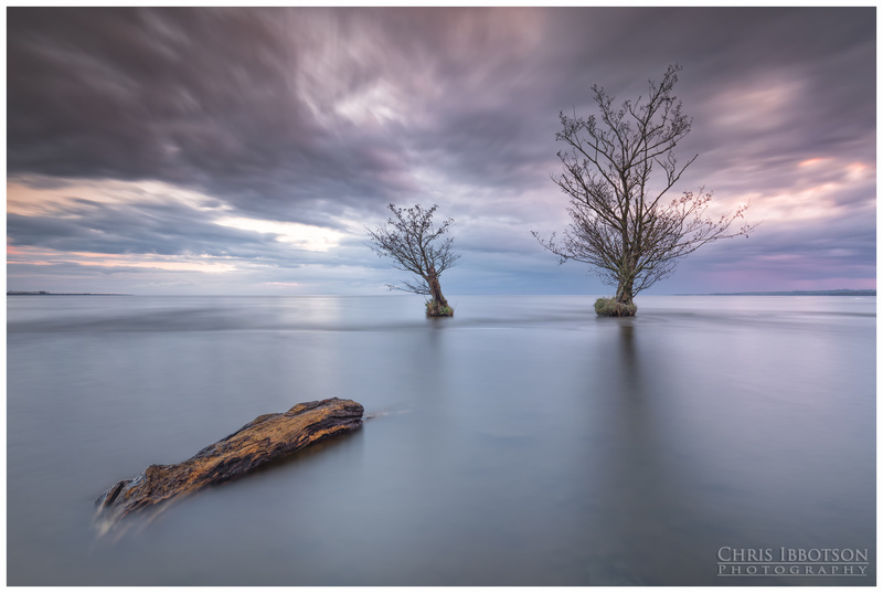 The Trees, Lough Neagh