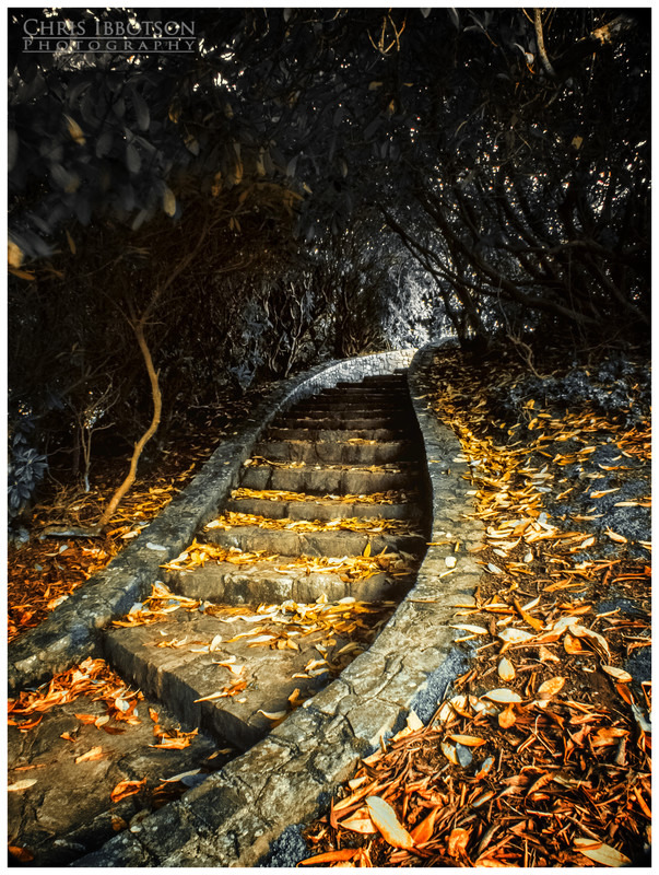 The Winding Steps, Tollymore Forest Park