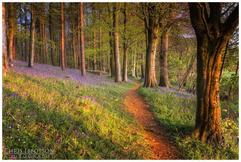 Portglenone Forest Park