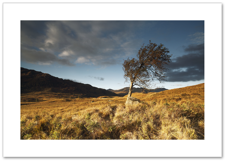 Tree of Arklet, Loch Arklet, Loch Lomond and the Trossachs National Park
