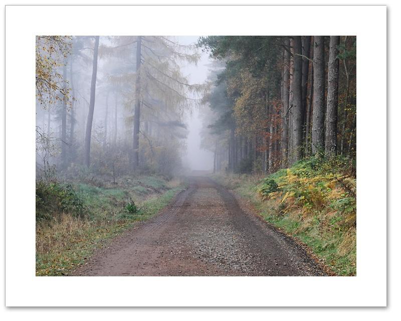 Avenue, Devilla Forest, Fife