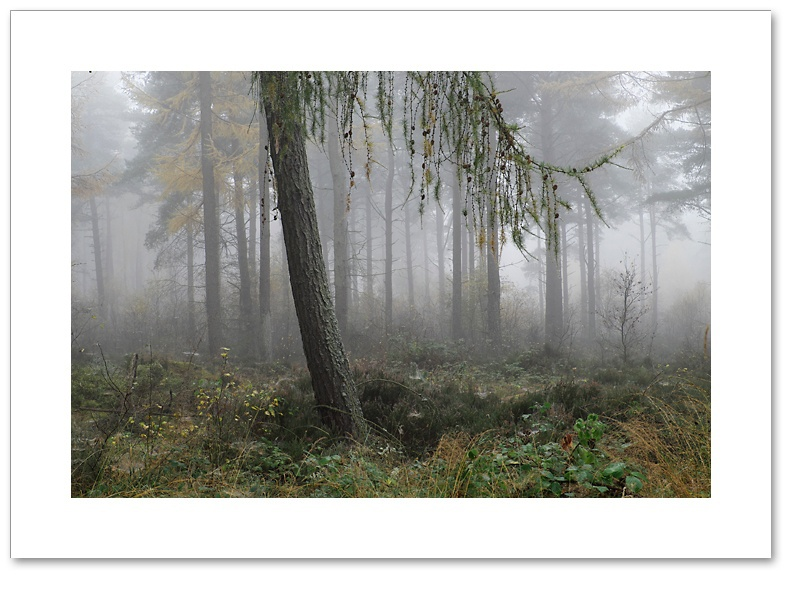 Gravity, Devilla Forest, Fife