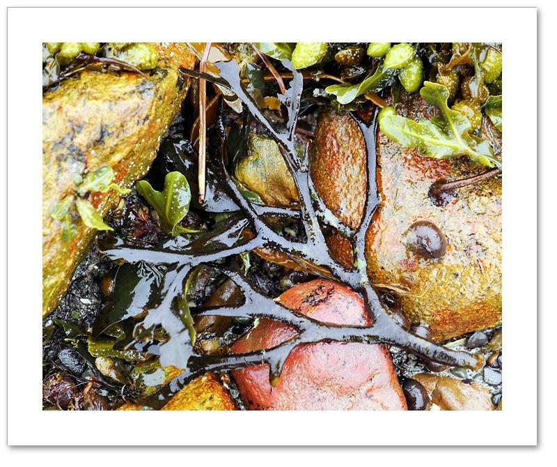 Seaweed VI