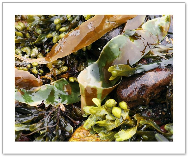 Seaweed V