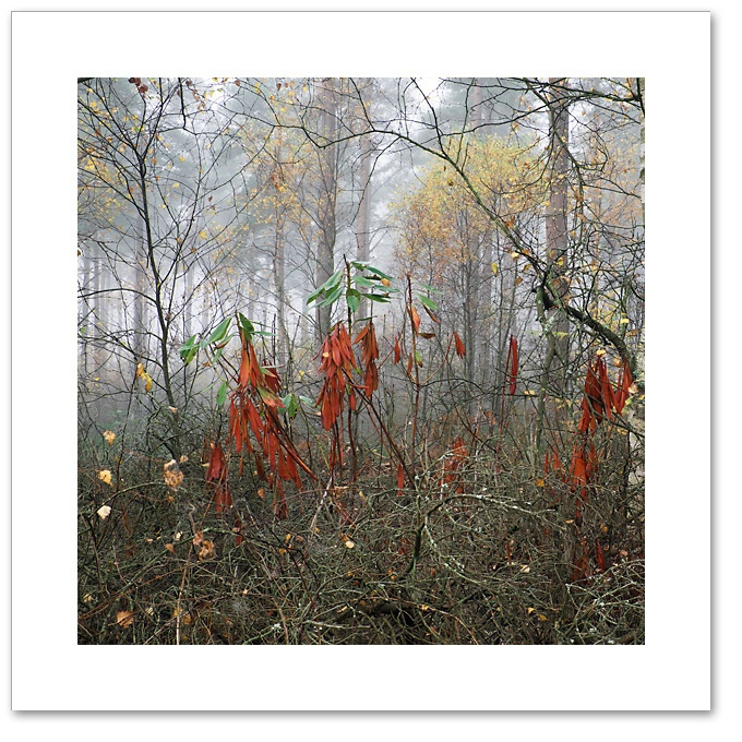 Green on Red, Devilla Forest, Fife