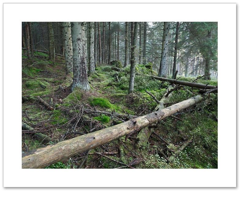 Pick Up Sticks, THrunton Wood, Northumberland