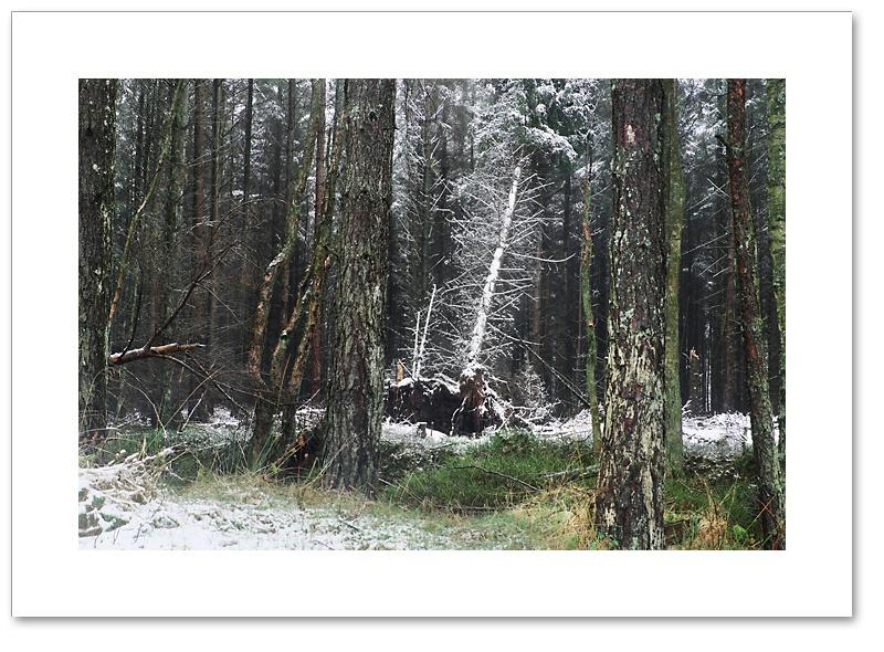 Sparkler, Devilla Forest, Fife
