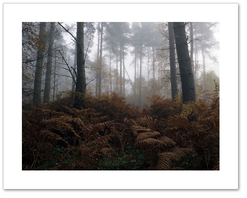 In My Time of Dying, Devilla Forest, Fife
