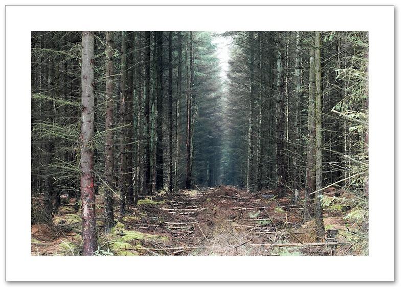 Firebreak, Devilla Forest, Fife