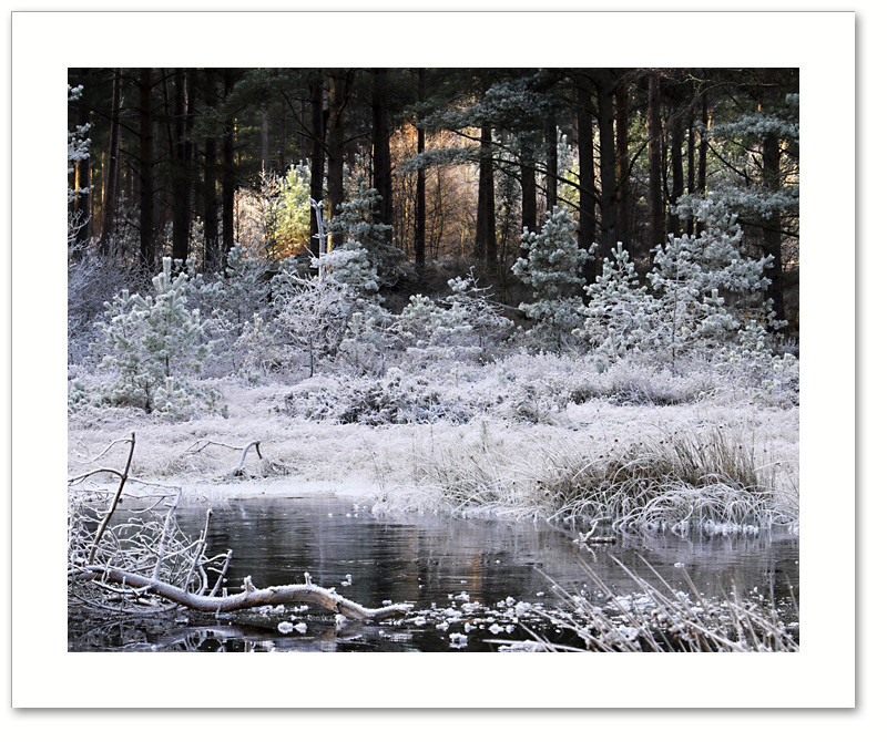 Fire & ice, Devilla Forest, Fife
