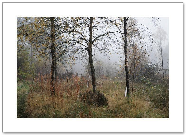 Surrender, Devilla Forest, Fife