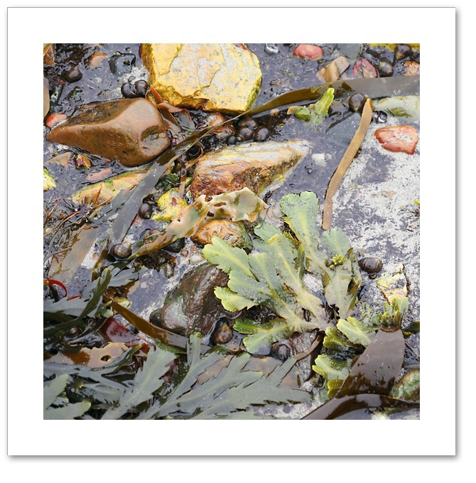 Seaweed IV